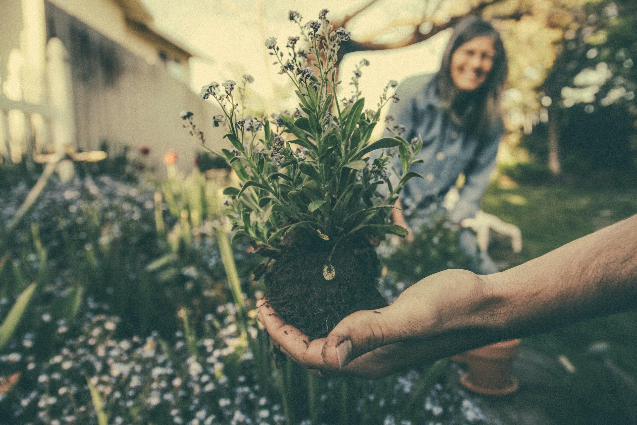 Frauentag im Garten und Landschaftsbau