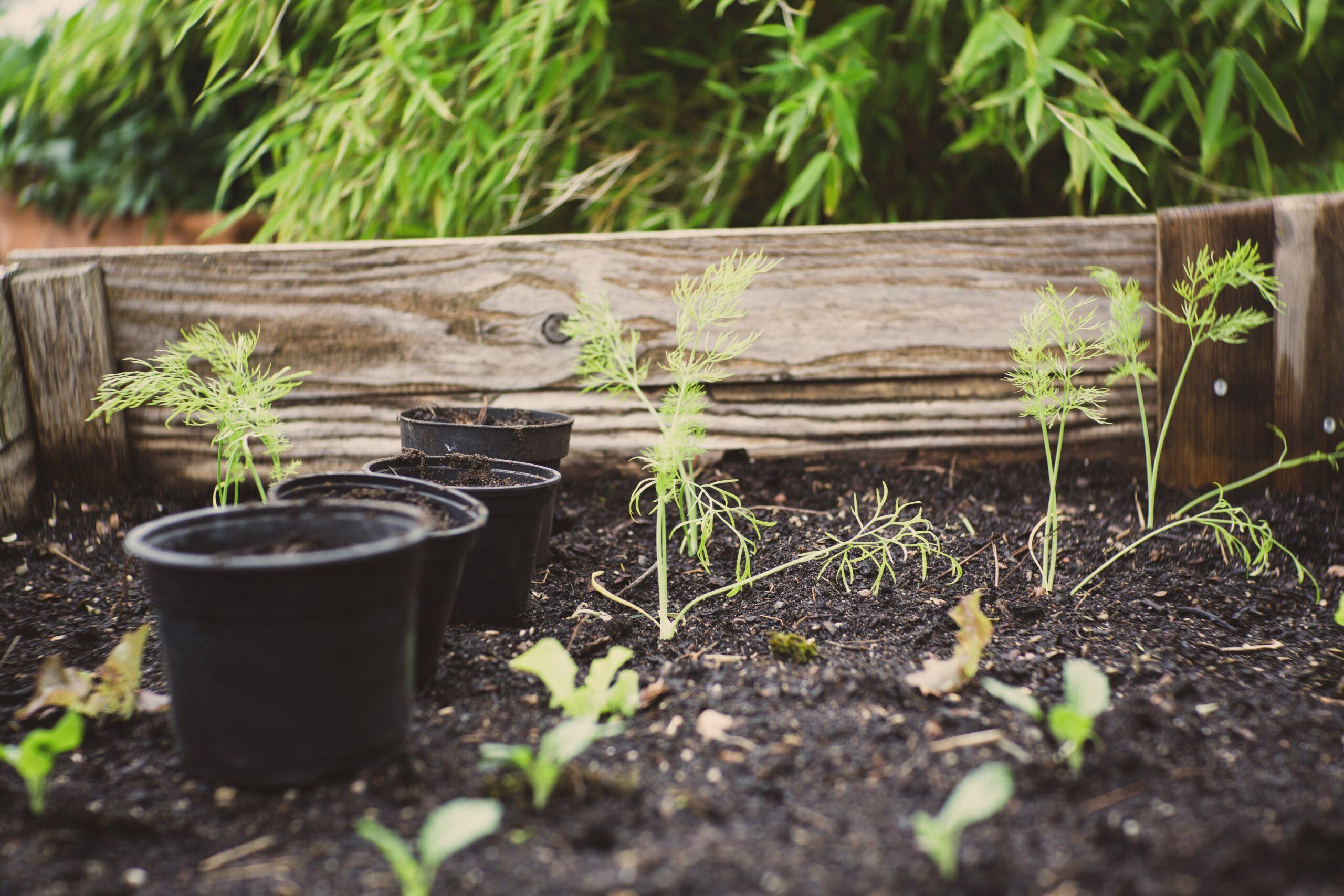 Raised bed planting smart to plan measurement