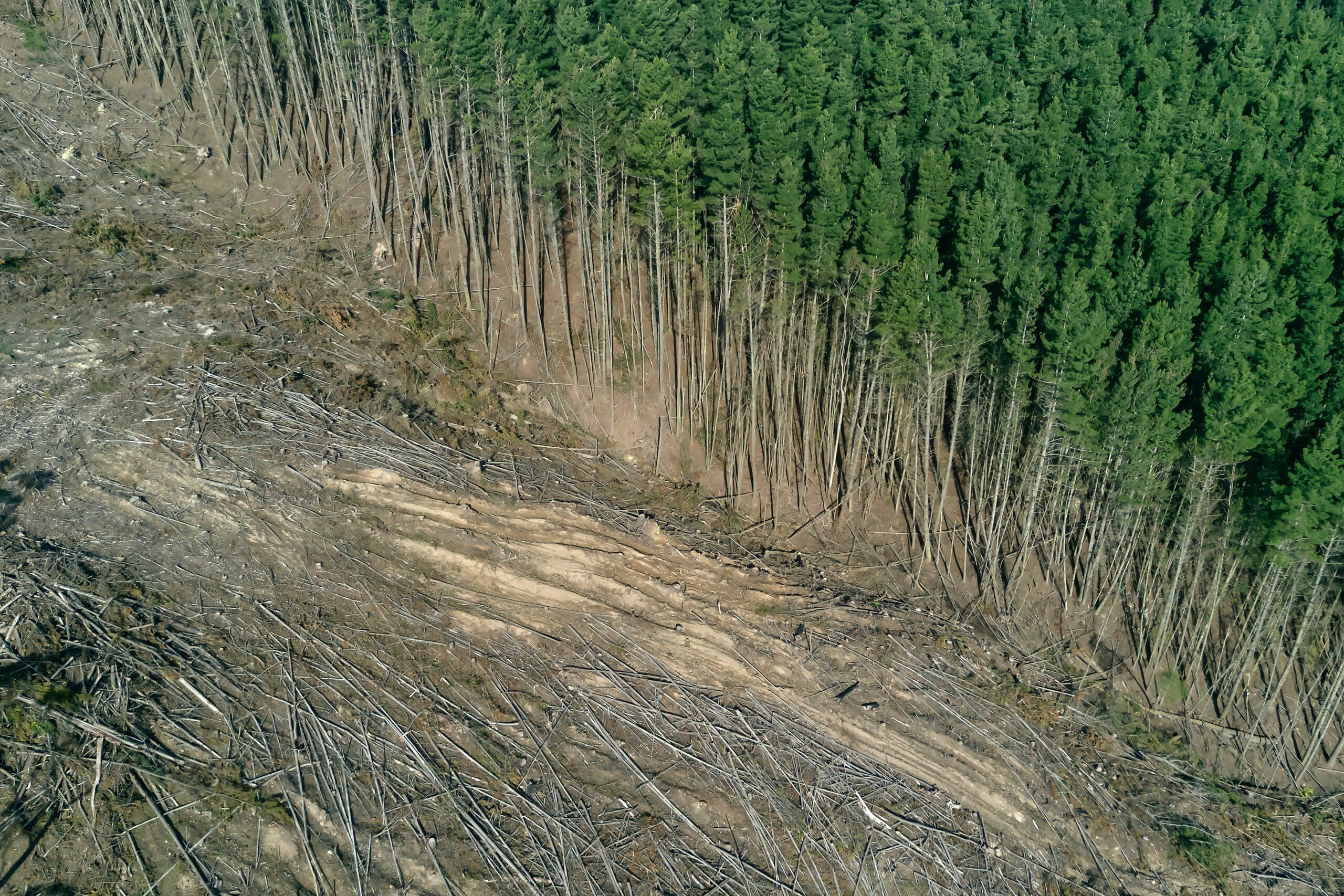 Abholzung Papierherstellung - smart to plan Papierschonung und Klimaschutz